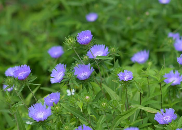 自然植物園の花